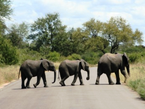 zuid afrika kinderen olifantentrio