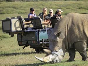 zuidvafrika neushoorn