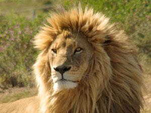 Zuid-Afrika gezinsreis op safaris