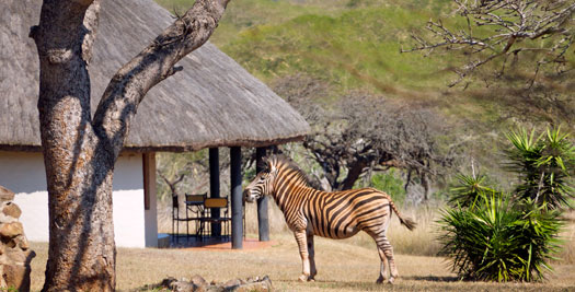 Zebra - rondreizen Zuid-Afrika