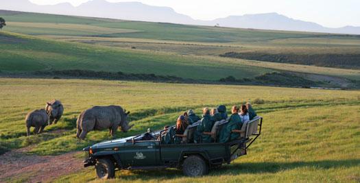 Safari tijdens je Zuid-Afrika reis