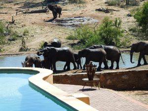 Big Five - Krugerpark