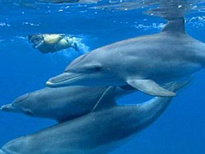 strand mozambique dolfijnen