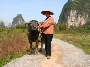 Bäuerin mit ihrem Büffel
