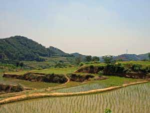 Reisfelder bei Yangshuo