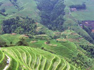 Longsheng Reisterrassen: Aussicht über die Reisterrassen