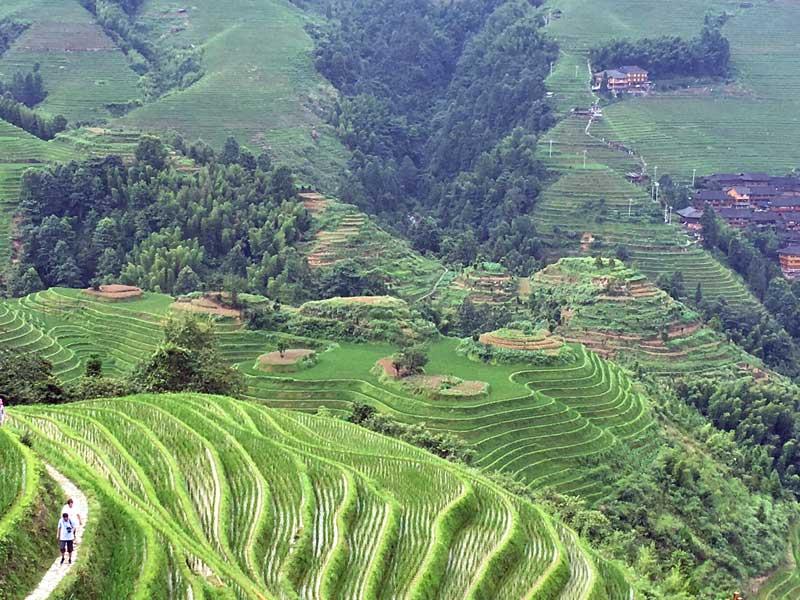 Aussicht über die Reisterrassen