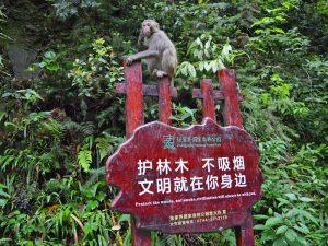 Affe auf einem Schild in Zhangjiajie