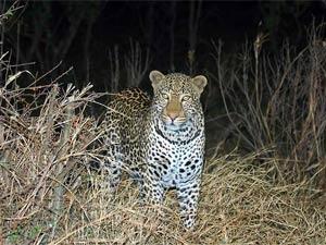 Zuid-Afrika nachtsafari - Bron: Droomplekken.nl