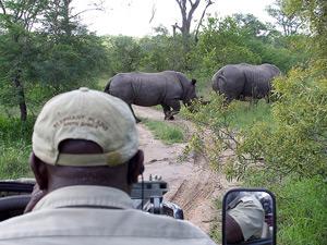 4wd olifant gamedrive