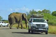 Rondreis 1: Avontuurlijk Zuid-Afrika