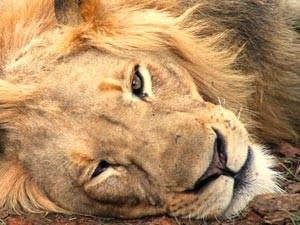 wildpark Zuid-Afrika Kruger