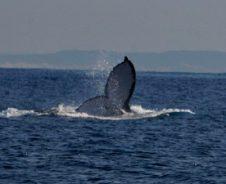 Op zeesafari: kajakken tussen walvissen en pinguïns