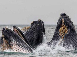 Hermanus _ Zuid Afrika Zeesafari-walvissen