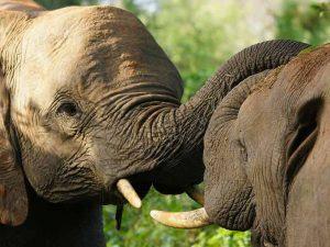 Oost Kaap Zuid-Afrika addo's-grijze-reuzen
