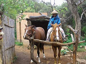 Paarden in Lesotho - Zuid-Afrika