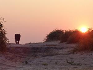 Zuid-Afrika reis samenstellen - olifant