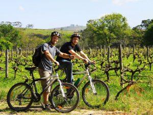 Op de fiets tussen de wijnranken