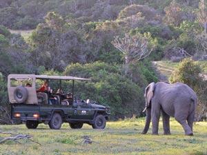 Olifanten tijdens je Zuid-Afrika safari