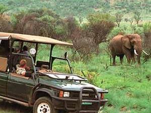 ranger safari Kruger