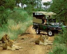 Een rush in de bush – op game drive in Zuid-Afrika