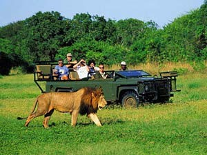 safari prive park