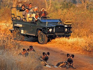 Big five spotten in Zuid-Afrika