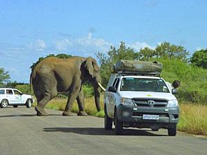 Krugerpark met je 4x4 auto