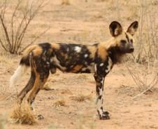 Dieren die je niet verwacht in Kruger