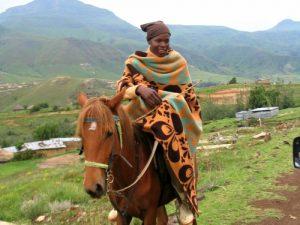 Lesotho paard