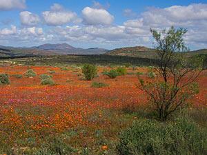 Nationaal park Zuid-Afrika