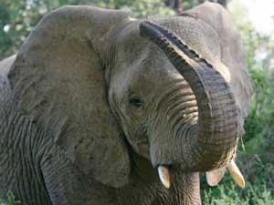 Mars voor olifanten, neushoorns en leeuwen