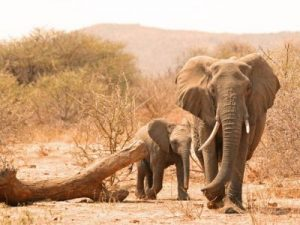 olifant-zuid-afrika-rondreis