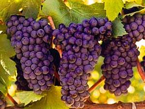 route-zuid-afrika-wijn