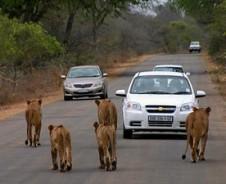Eigen-wijze Kruger reis