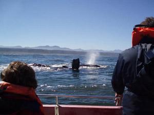 Zuid-Afrika reizen - walvissen