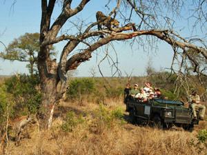 Safari Zuid-Afrika - cheetah gespot