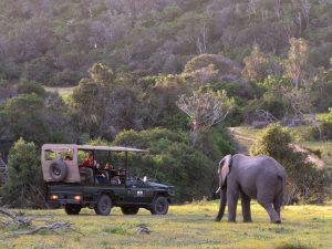 Safari Oostkaap