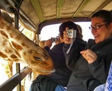 Safari aan de Kaapse kust