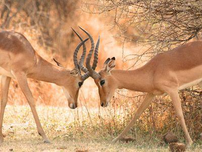 Zelf samenstellen Zuid-Afrika rondreis - Springbok