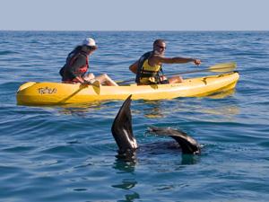 Kajakken tussen de walvissen