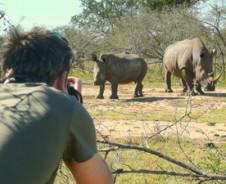 Swazi safari