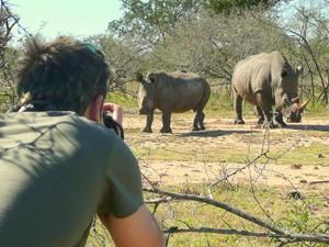 Neushoorns in het Mkhaya Game Reserve