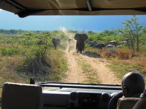 Gamedrive Entabeni - reizen Zuid-Afrika
