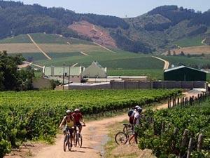 Fietsen door de wijngaarden - Stellenbosch