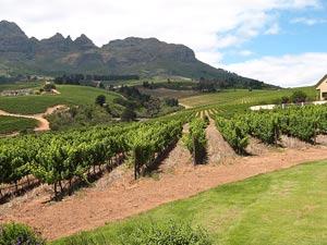 Wijnroute Stellenbosch - Zuid-Afrika