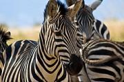 Rondreis 4: Over zebrapad naar Tafelberg