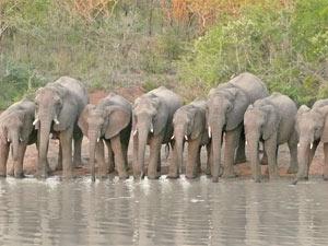 Drinkende olifanten - Zuid-Afrika reis