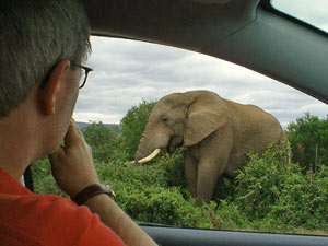 Olifant spotten tijdens je Zuid-Afrika reis