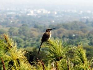 botanische tuinen kaapstad zuid afrika